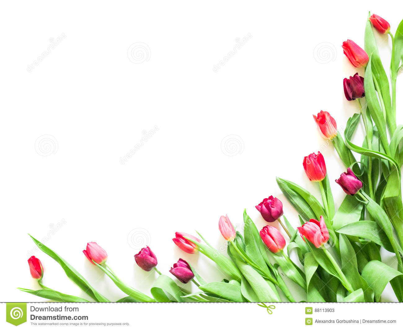 Present card with tulip flowers corners template stock image present card with tulip flowers corners template pronofoot35fo Choice Image