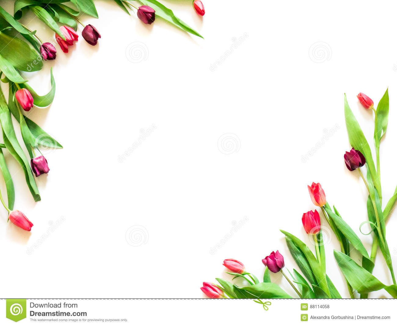 Present Card With Tulip Flowers Corners Template Stock Photo - Image ...
