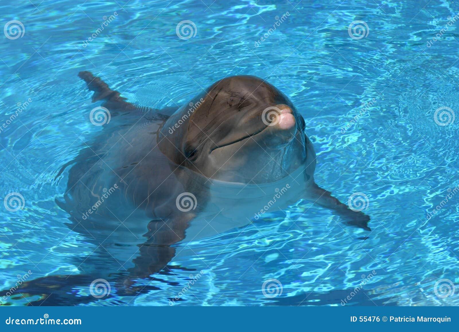 Presentación del delfín
