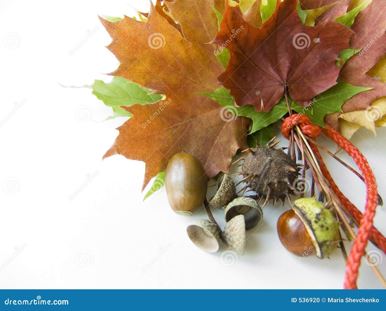 Presentes coloridos do outono