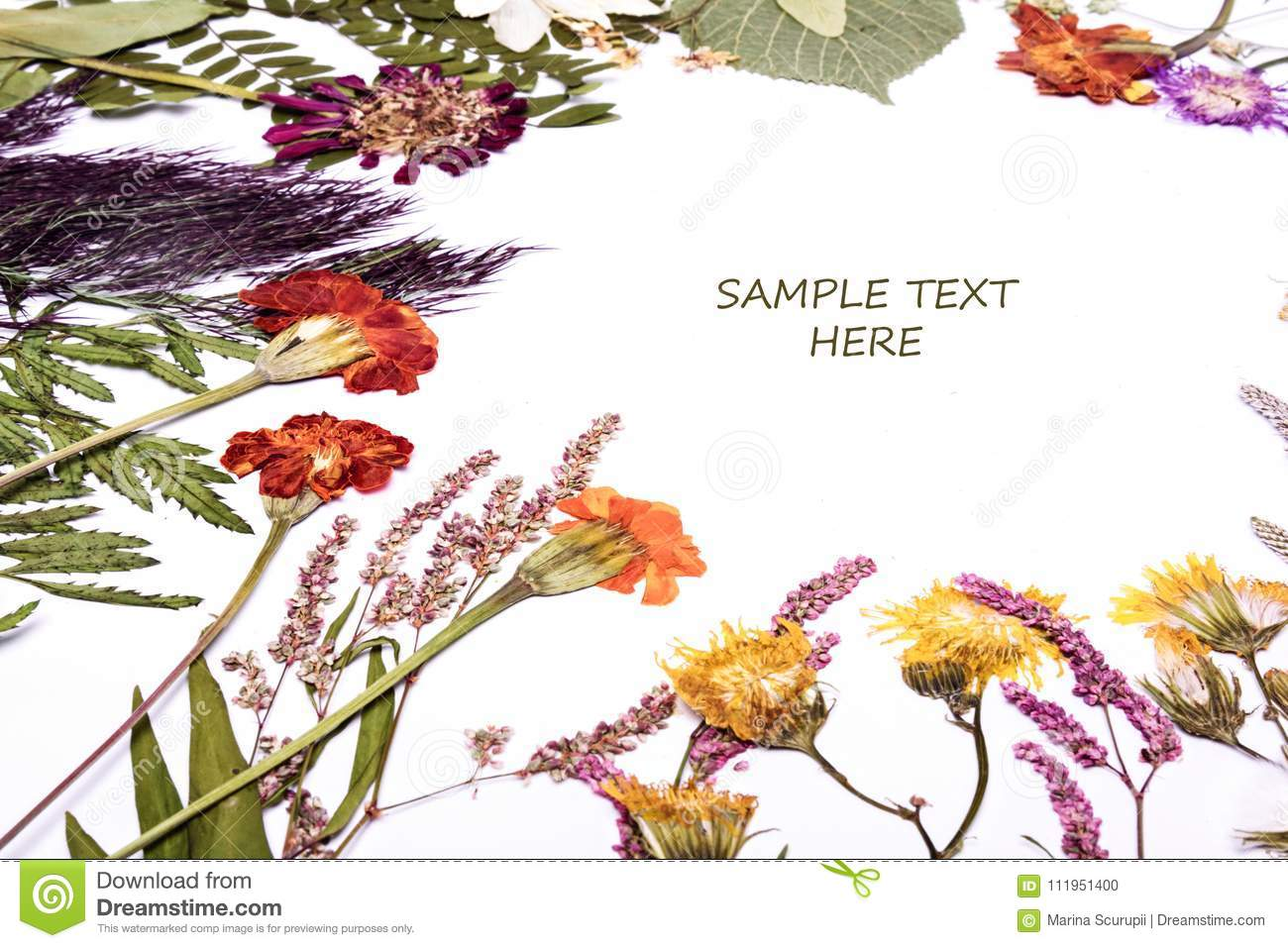Pressed And Dried Summer Flower Stock Photo Image Of Plant