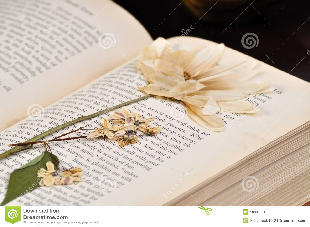 pressed flower in old book stock photo  image of