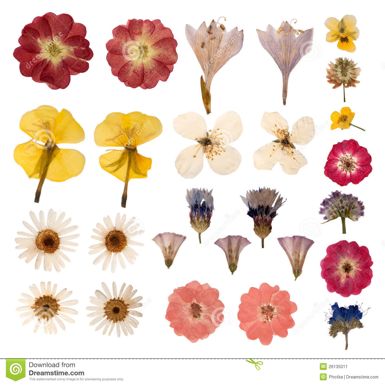 Pressed Flowers Stock Image - Image: 26135011