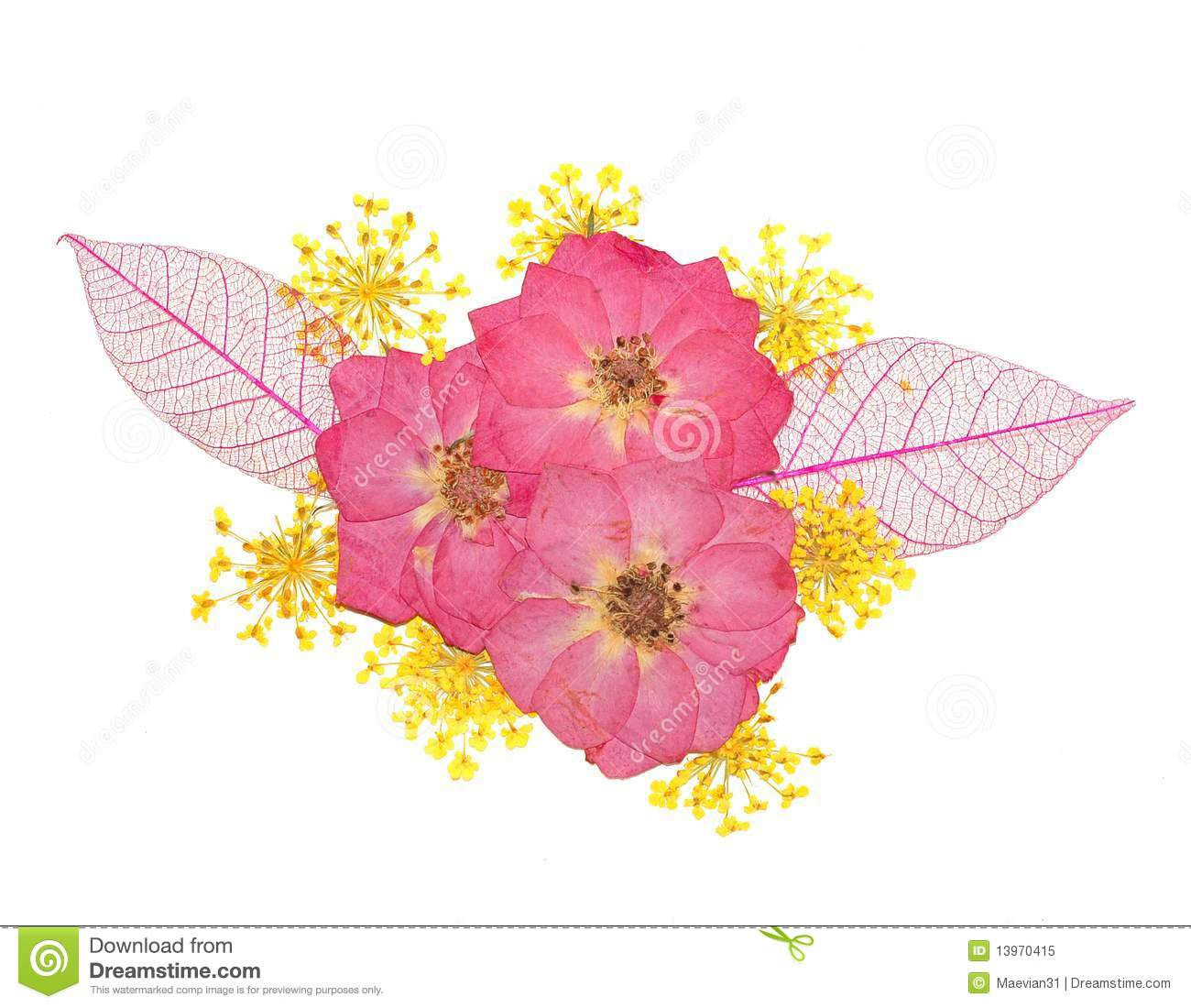Pressed Flowers Rose And Lace Flower Royalty Free Stock Image 1397