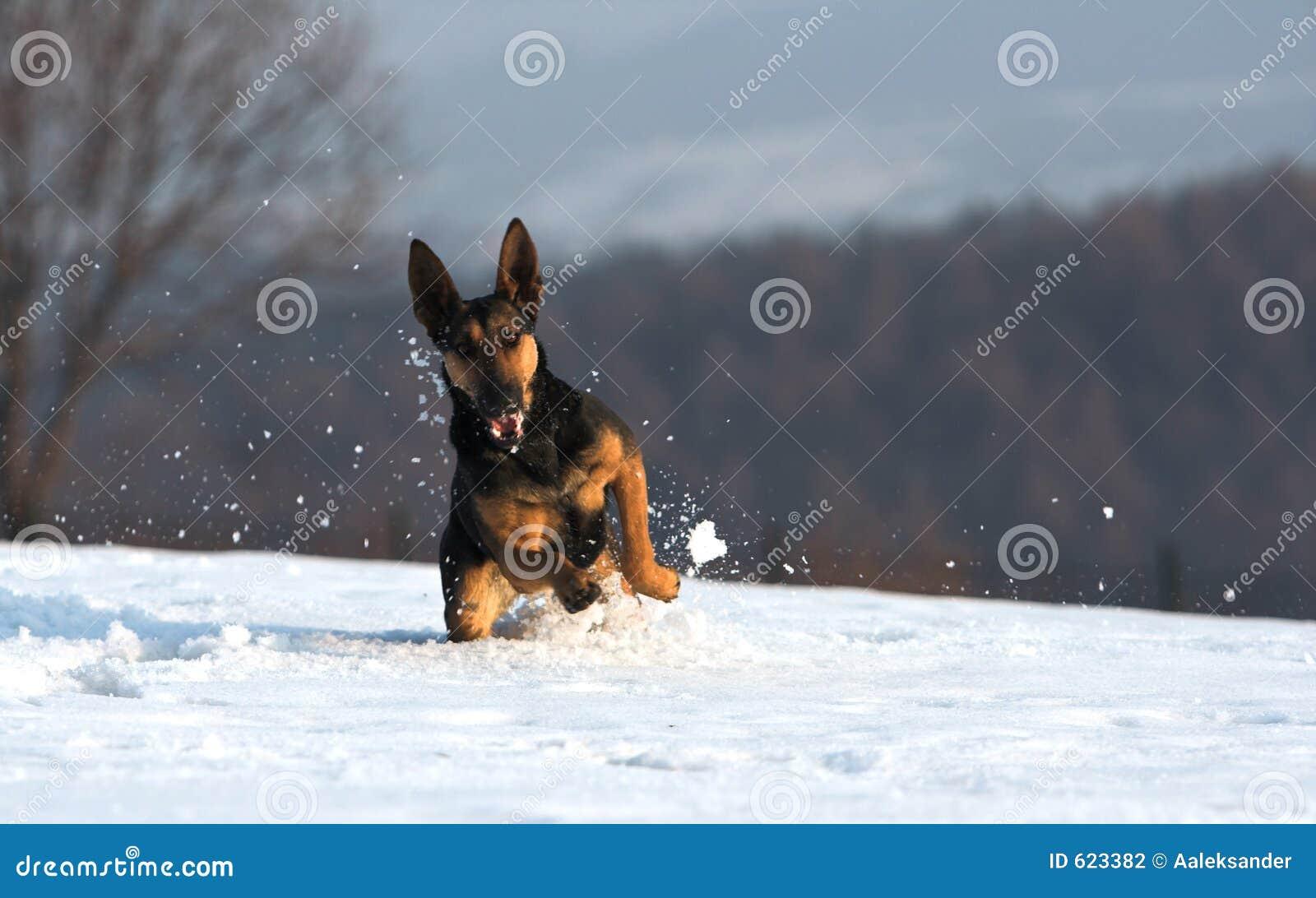 Pret in de sneeuw