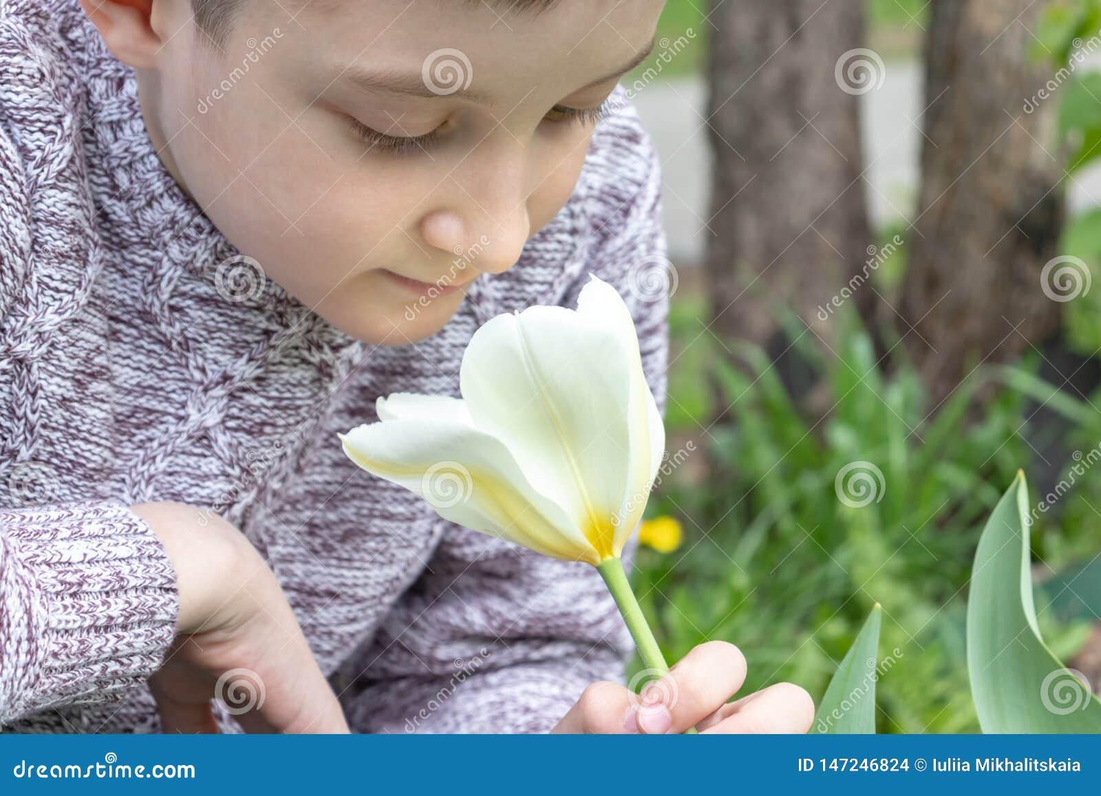 A preteen caucasian boy smelling white tulip flower in the spring garden