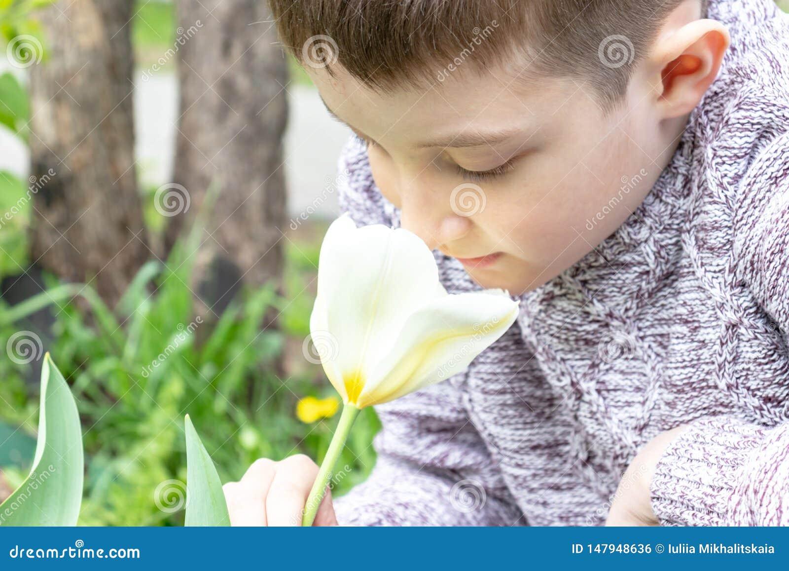 A preteen Kaukasische jongen die witte tulpenbloem in de de lentetuin ruiken