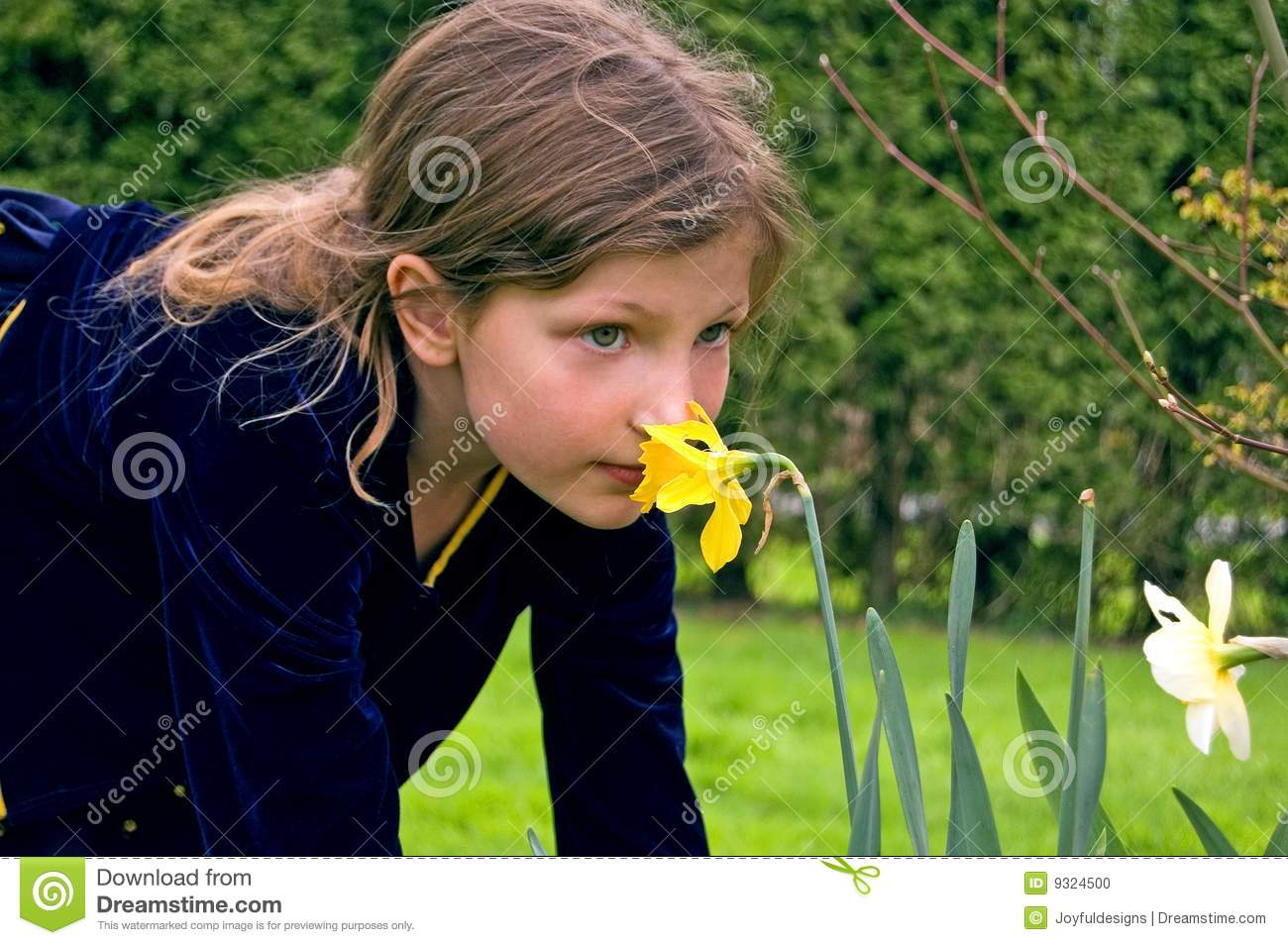 Pretty 8 Year Old Girl Smelling Daffodil Stock Photo