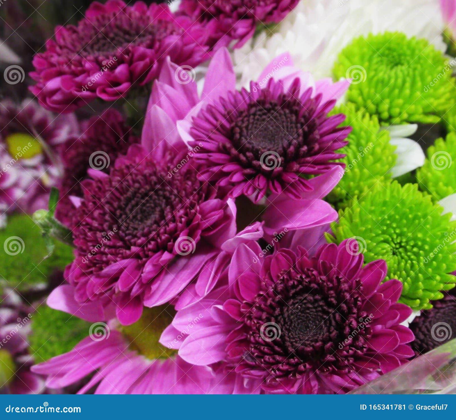 Pretty Fresh Bright Purple Dahlia Flowers Bouquet Stock Image Image Of Bright Shop 165341781
