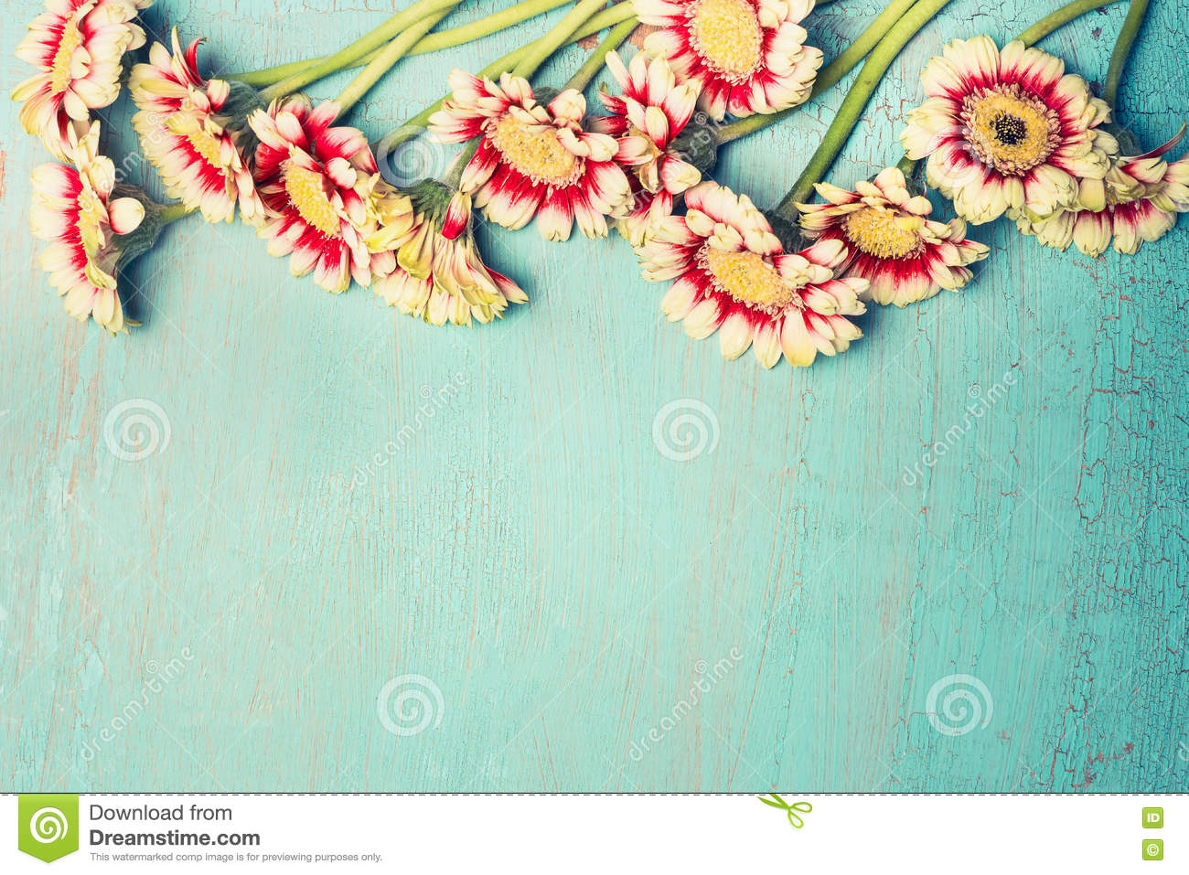 Pretty Daisies Or Gerbera Flowers On Turquoise Blue Shabby Chic Background Top View Border