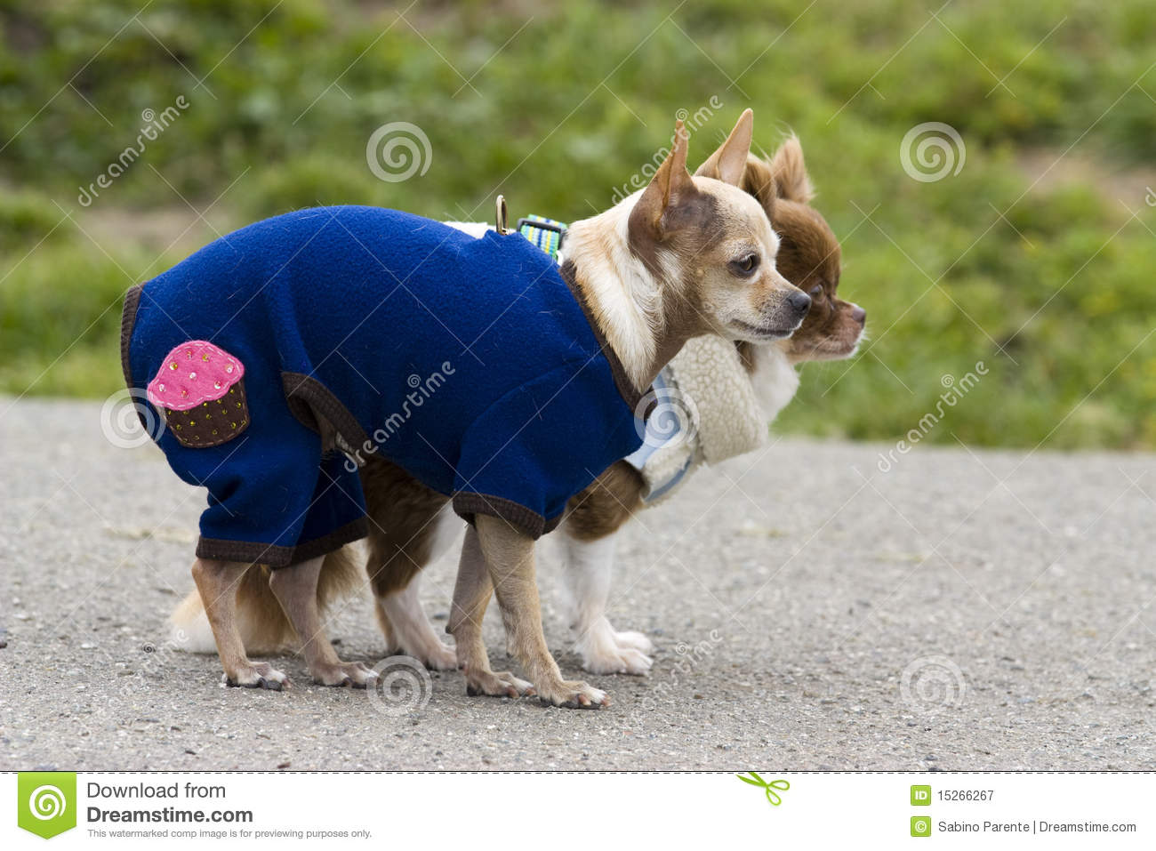 Pretty Dogs Royalty Free Stock Photography - Image: 15266267: dreamstime.com/royalty-free-stock-photography-pretty-dogs...