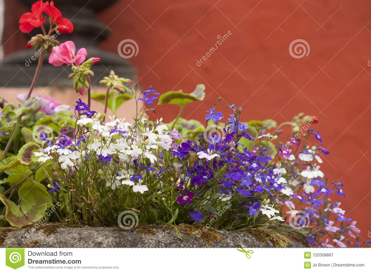 Pretty Early Summer Flowers In A Rockery Stock Image Image Of