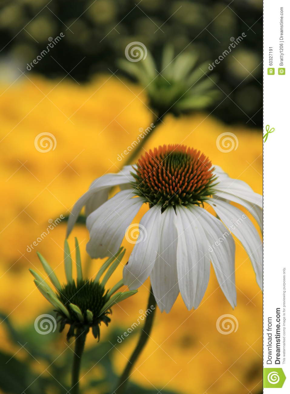 Pretty fall flowers in landscaped gardens stock image image of pretty fall flowers in landscaped gardens mightylinksfo