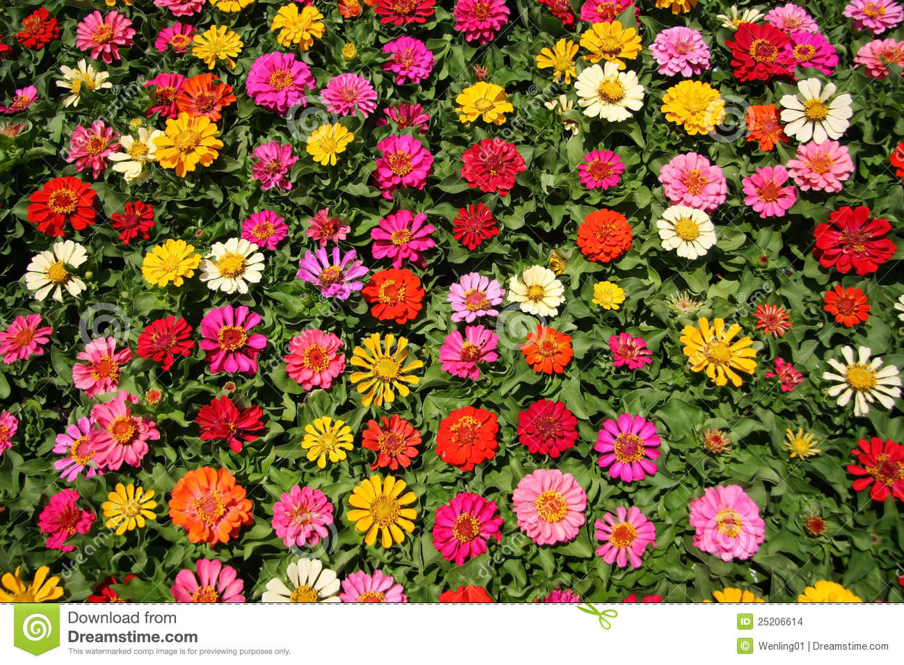 Pretty flowers background stock photo image of close 25206614 pretty flowers background mightylinksfo