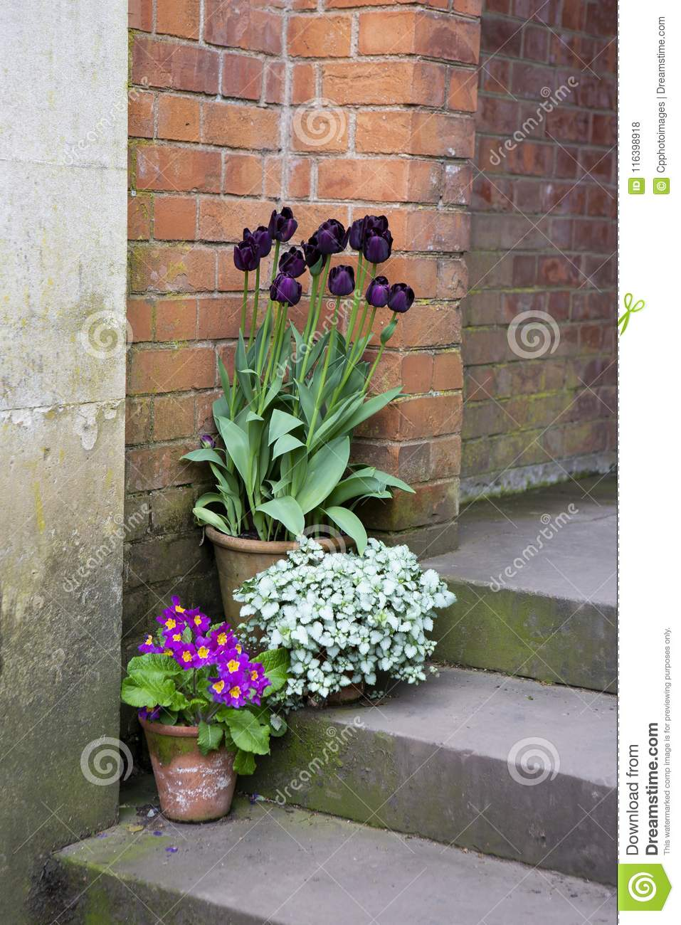 Pretty Flowers On Pots On Steps Stock Photo Image Of Tulips Soil