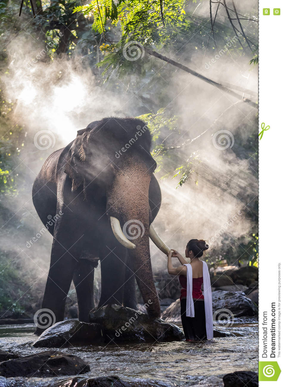 Pretty girl in traditional thai costumes touching elephant`s ivory