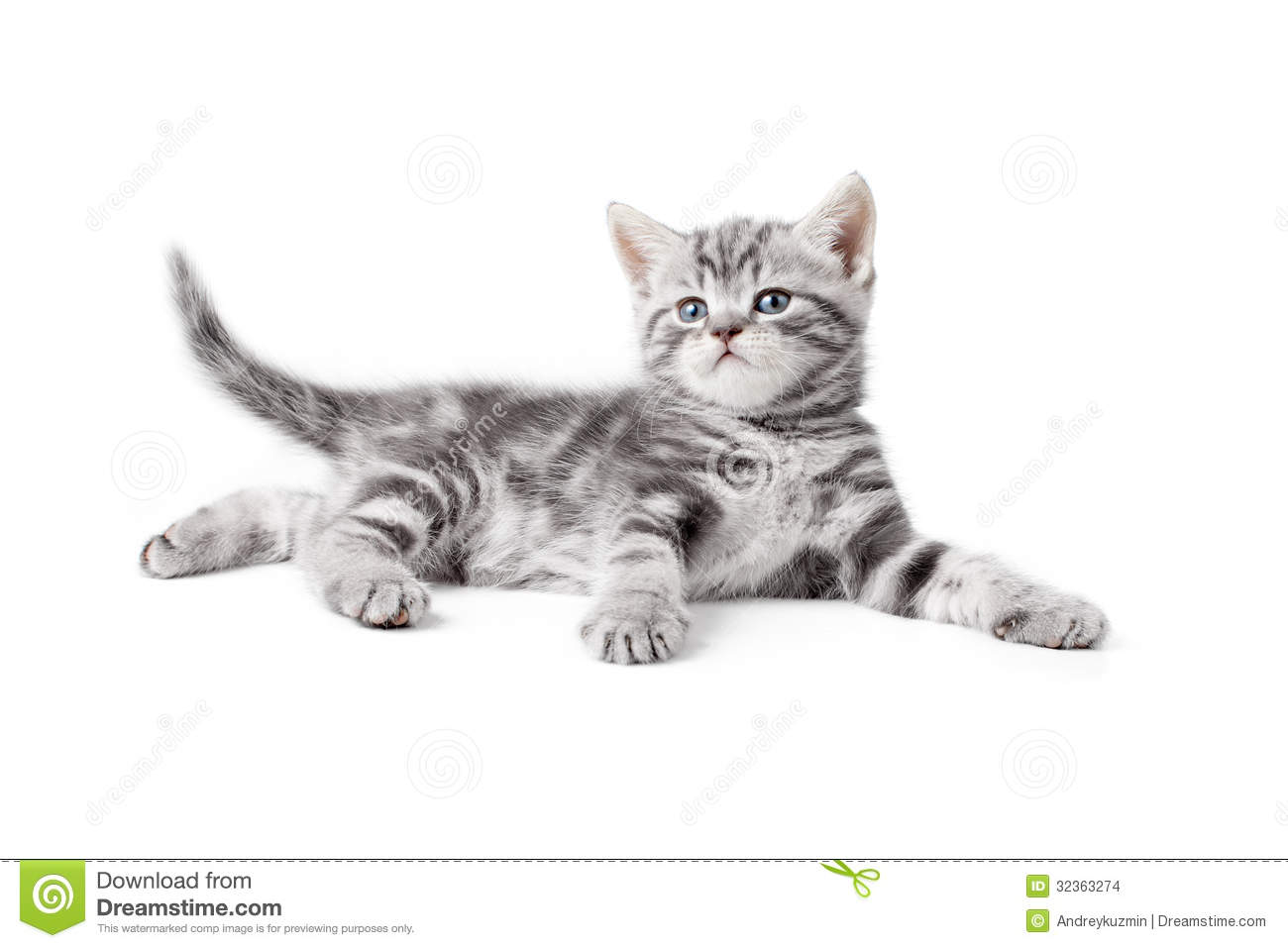 Pretty Gray Whiskas British Kitten Lying Stock Images - Image ...