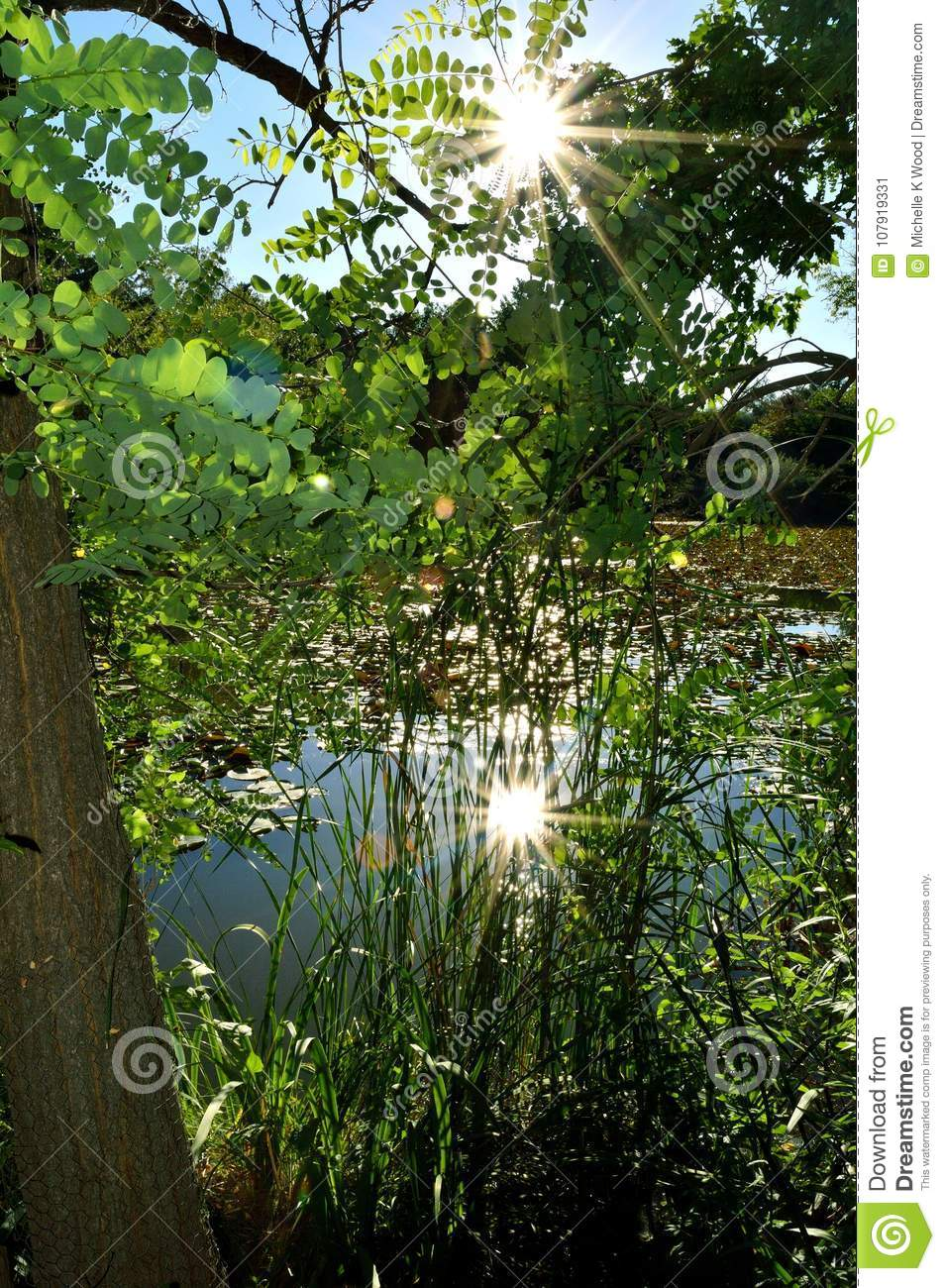 Sun reflection through trees on pond