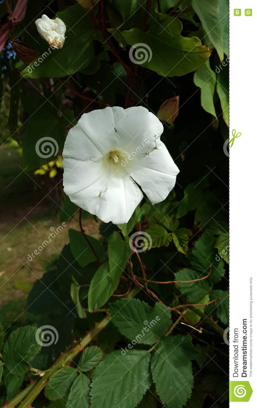 Pretty Little Flower Stock Photo Image Of City Flower 79658906