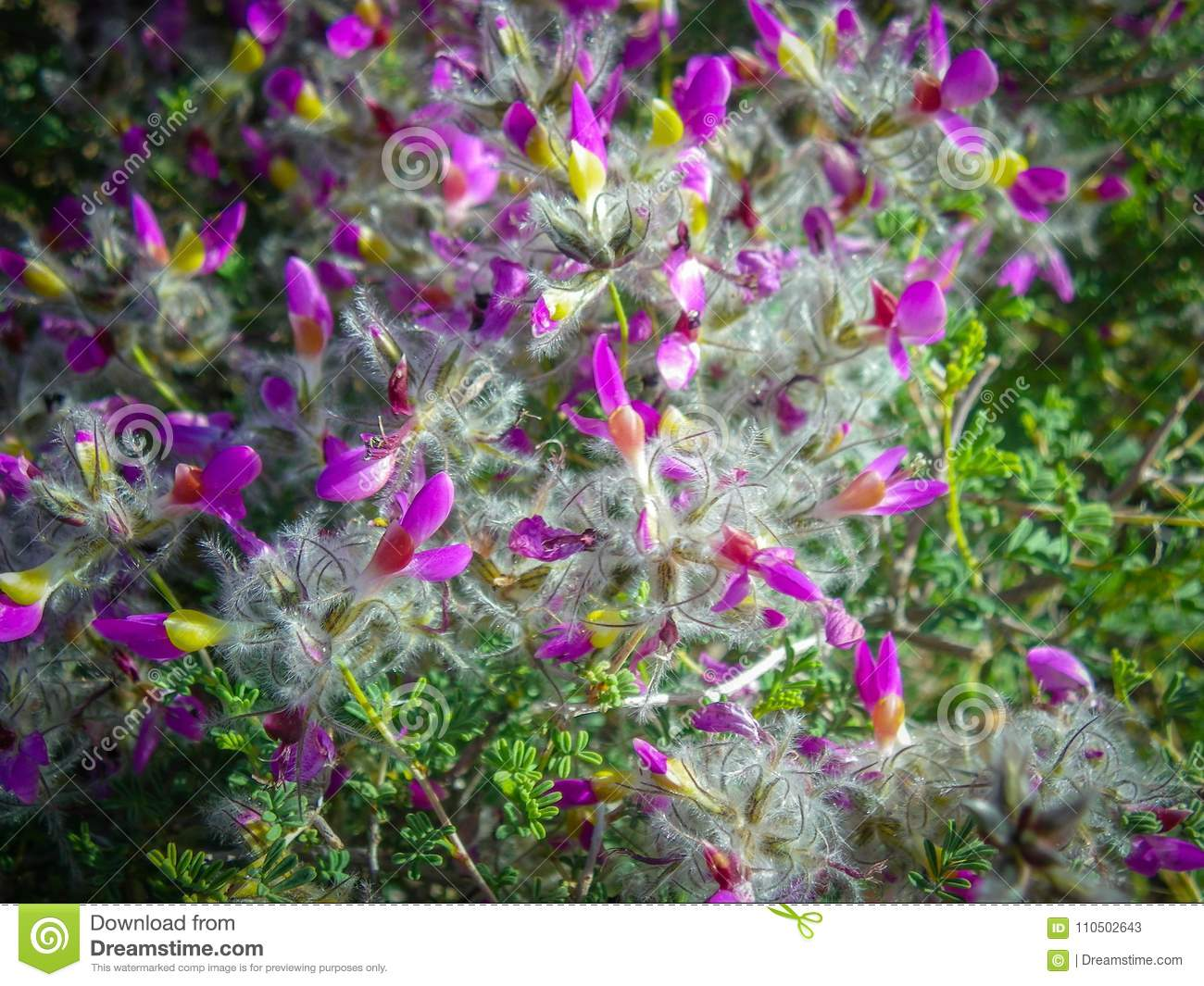Pretty Little Purple Flowers With Yellow Center Stock Image Image