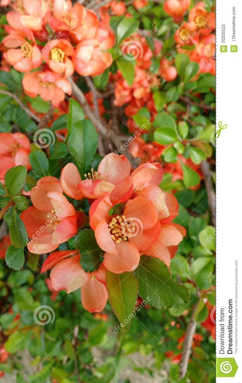 Pretty Orange Flowers Stock Image Image Of Vancouver 70205523