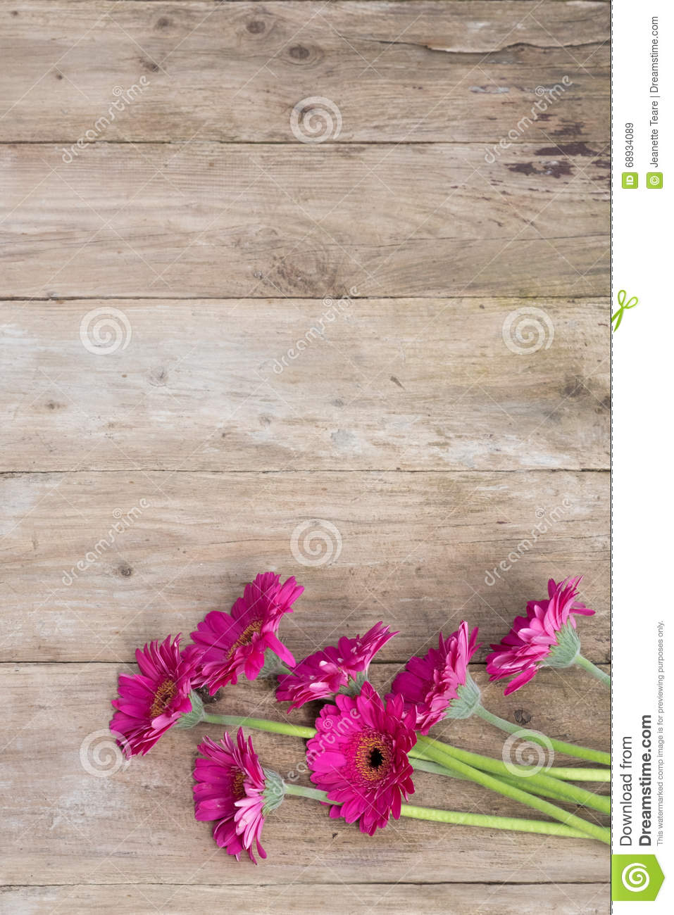 Pretty pink daisy flowers on wood background stock photo