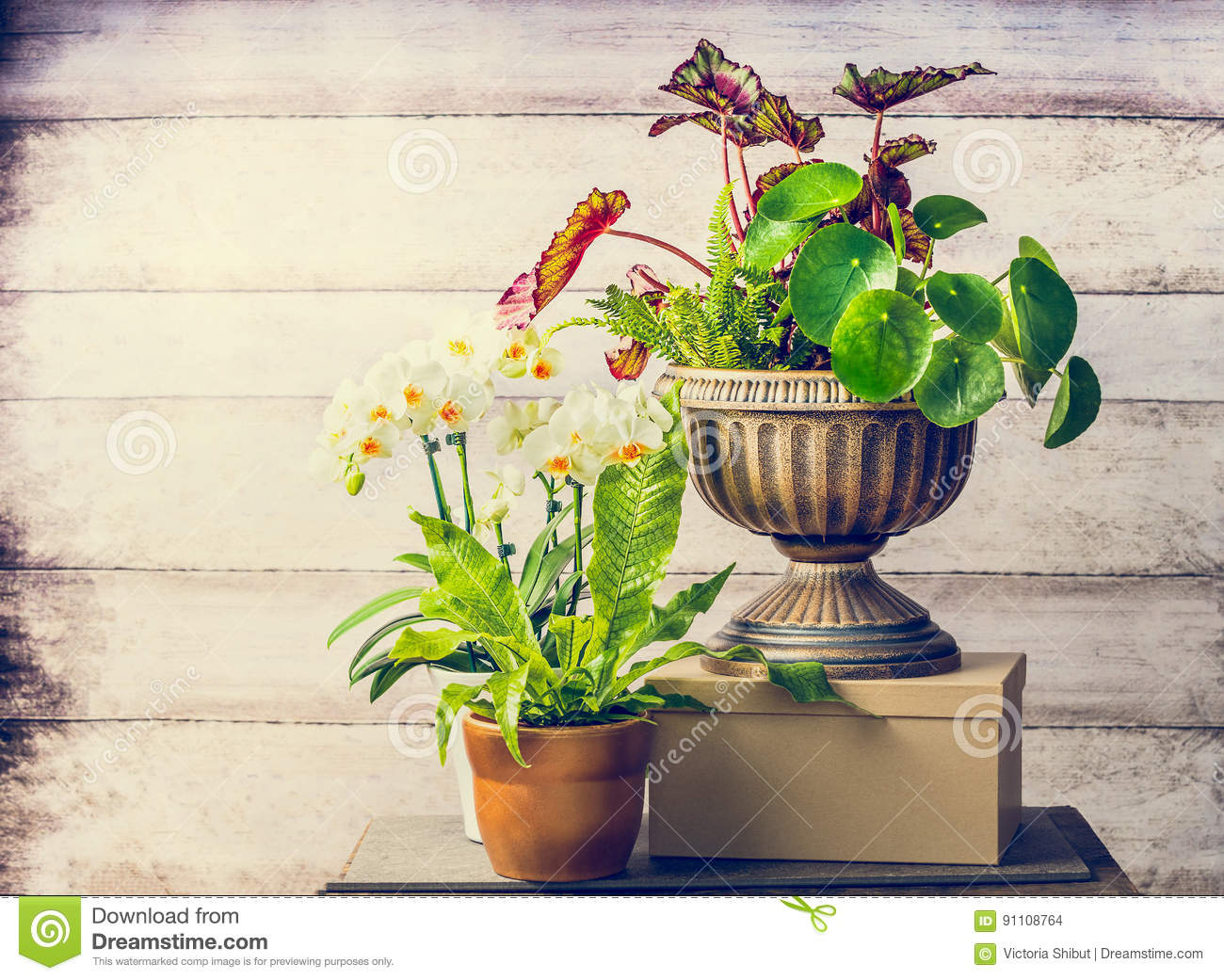Pretty plants and orchid flowers for indoor container gardening pretty plants and orchid flowers for indoor container gardening mightylinksfo