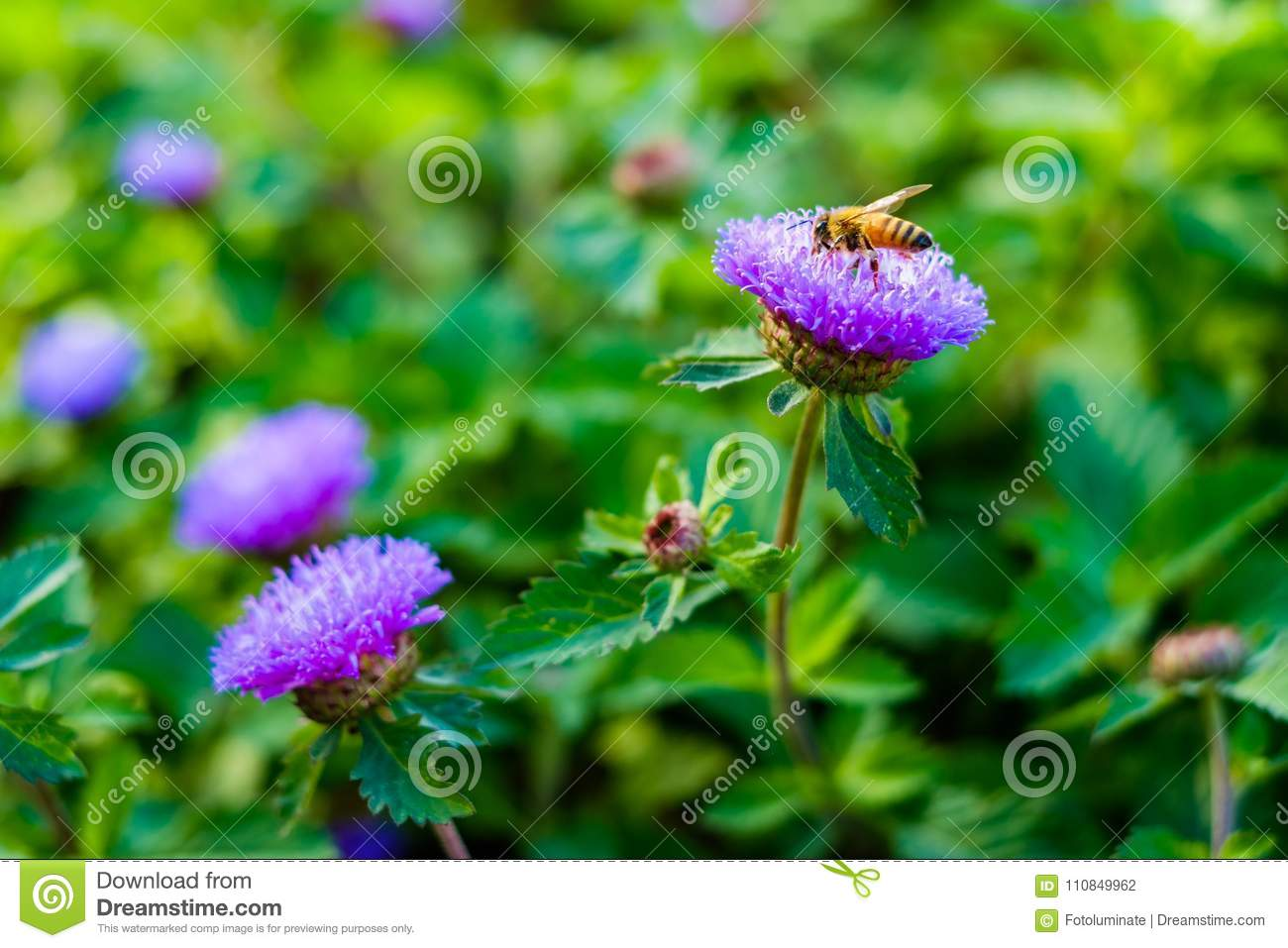 Pretty Purple Flowers Stock Photo Image Of Floral Pretty 110849962