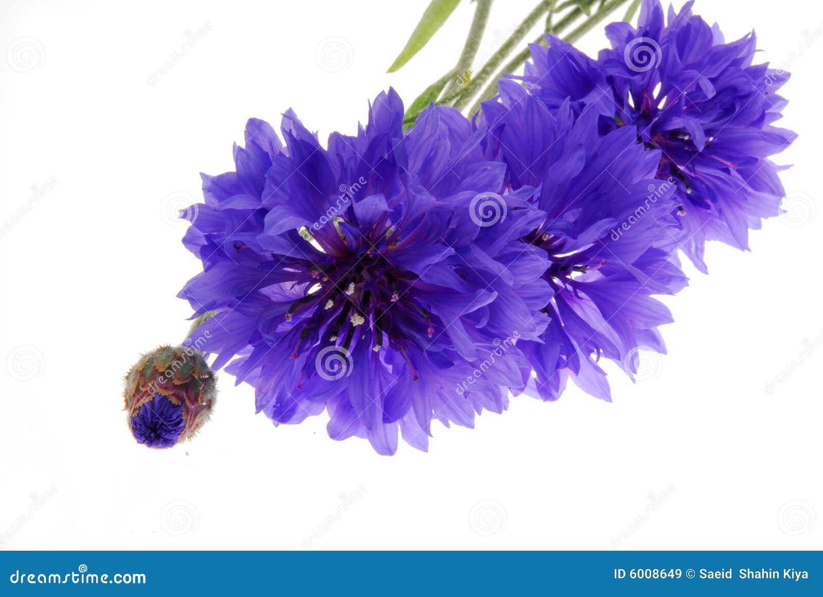 Pretty Purple Flowers White Background Pretty purple flowers on white
