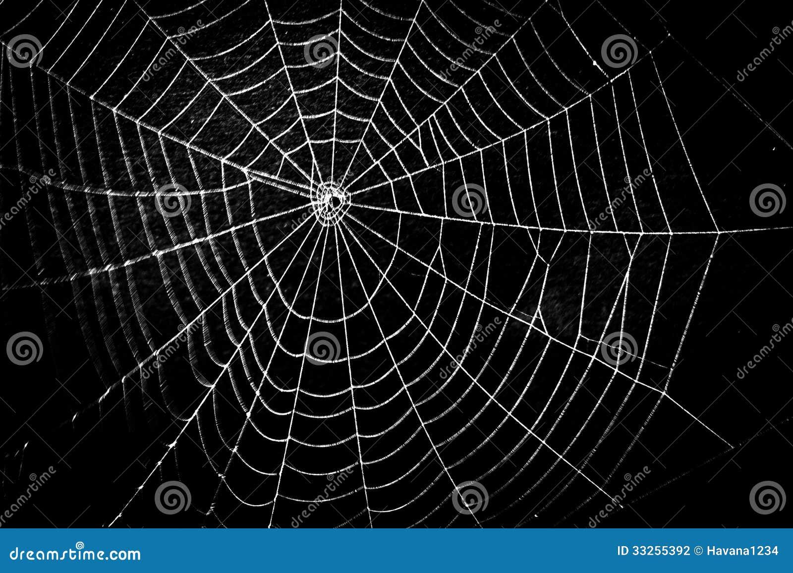 Erotic webs