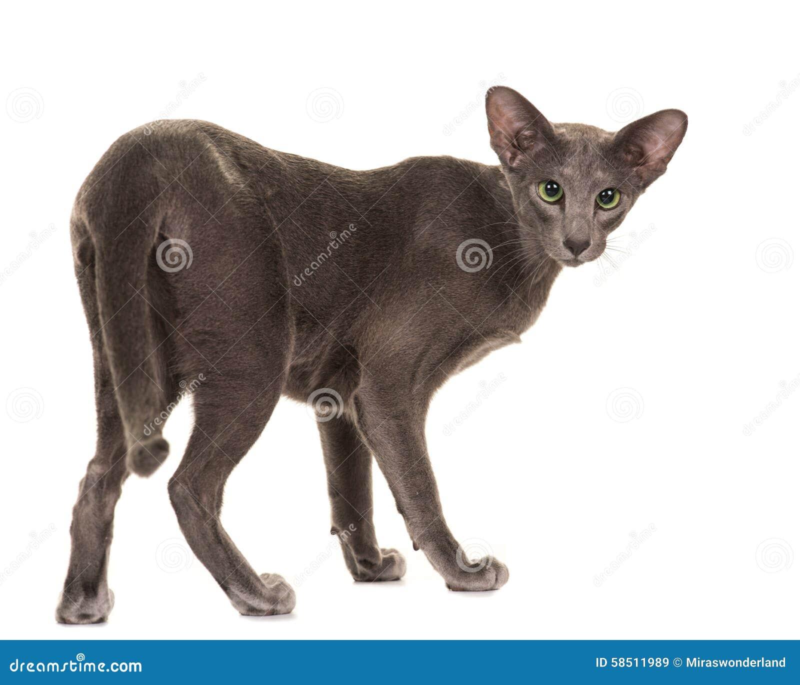 Grey And Black Cartoon Cats