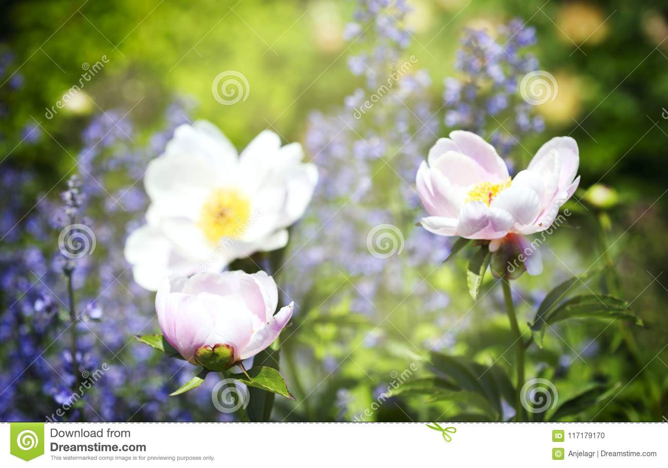 Pretty Summer Flowers Stock Photo Image Of Bloom Greeting 117179170