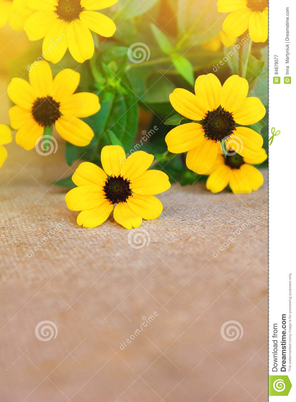 Pretty Yellow Flowers On Burlap Stock Image Image Of Flower Aging