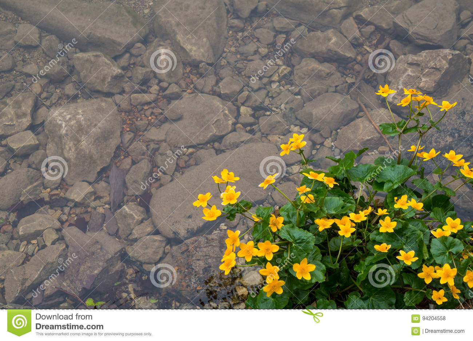Pretty Yellow Flowers Stock Photo Image Of Coast Concept 94204558