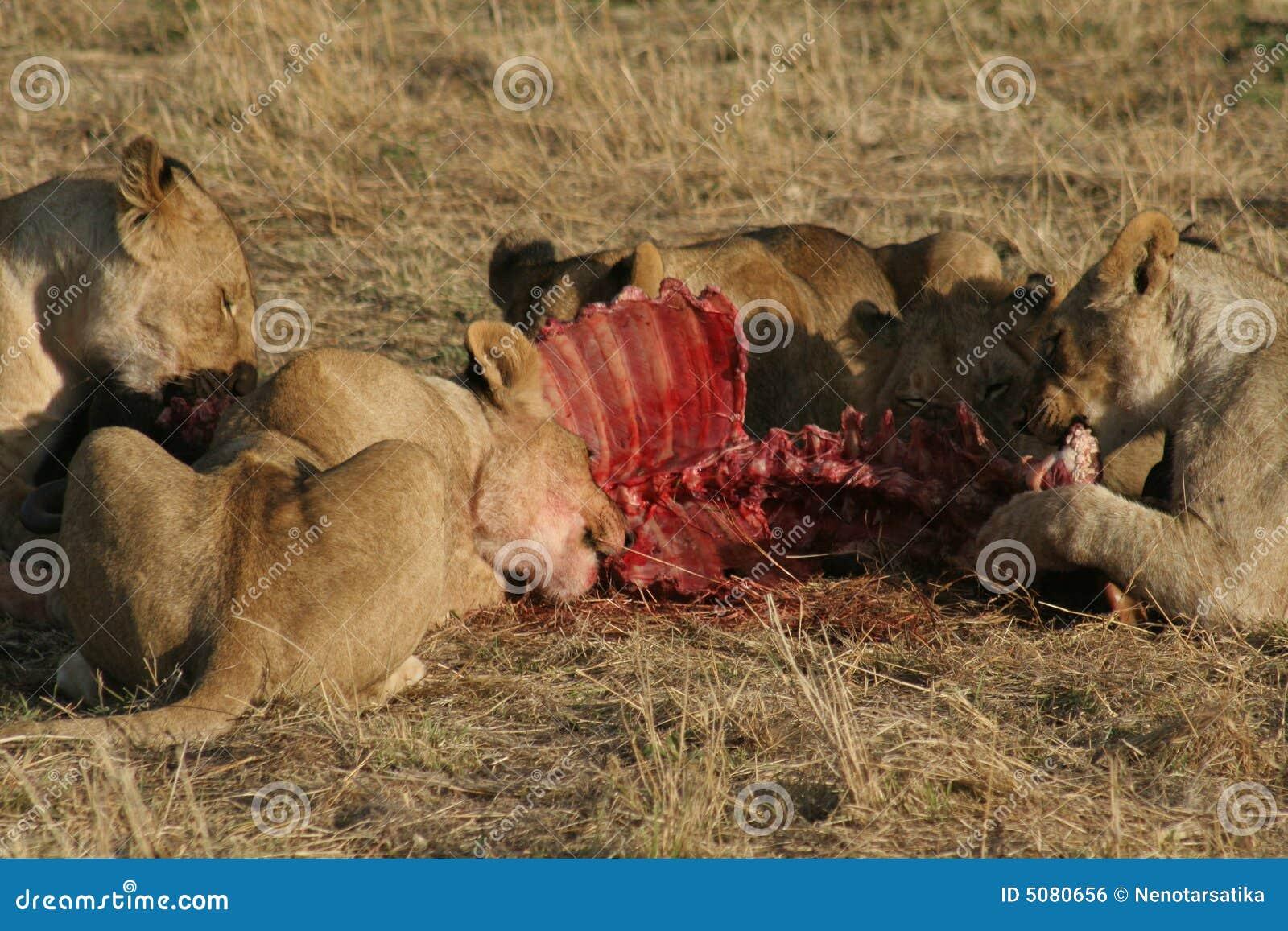Prey львов