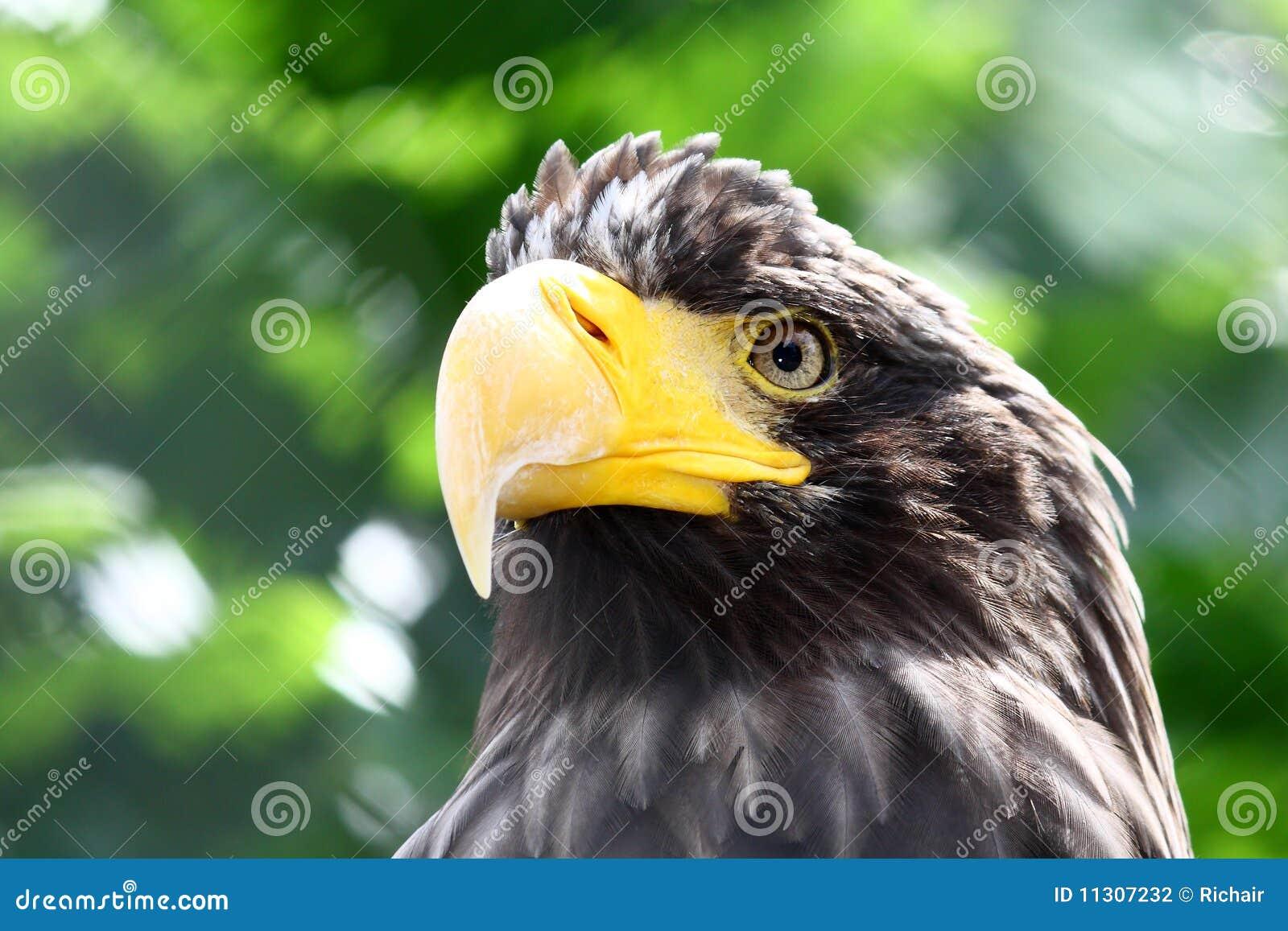 Prey портрета птицы