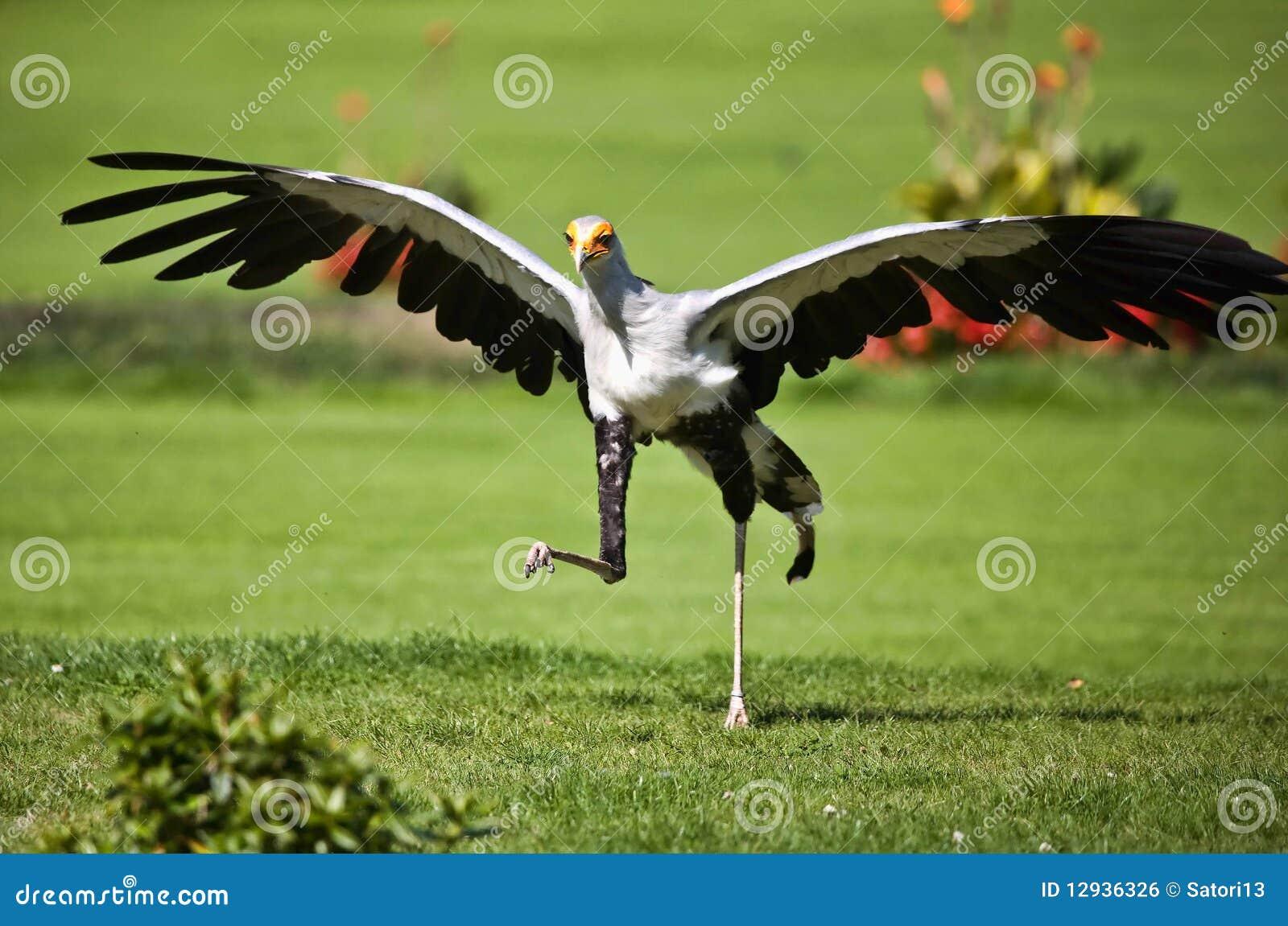 Prey птицы