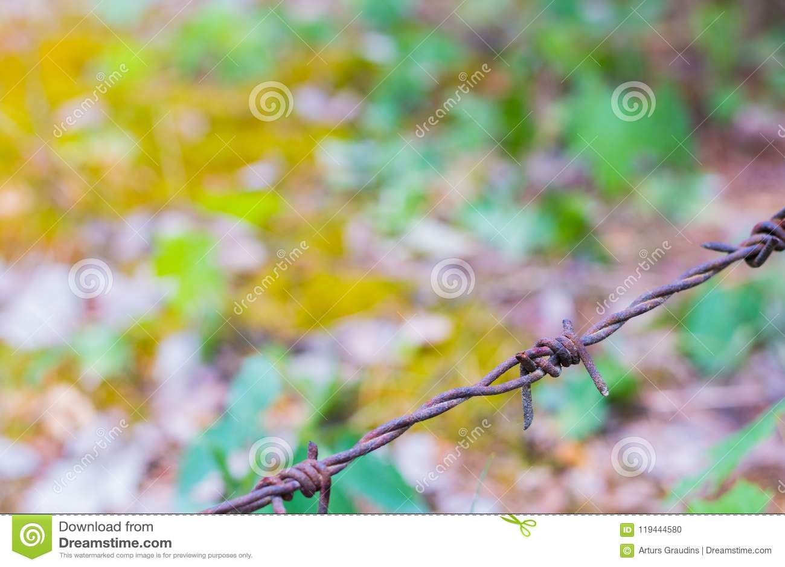 Prikkeldraad op een onscherpe bosachtergrond wordt geïsoleerd die