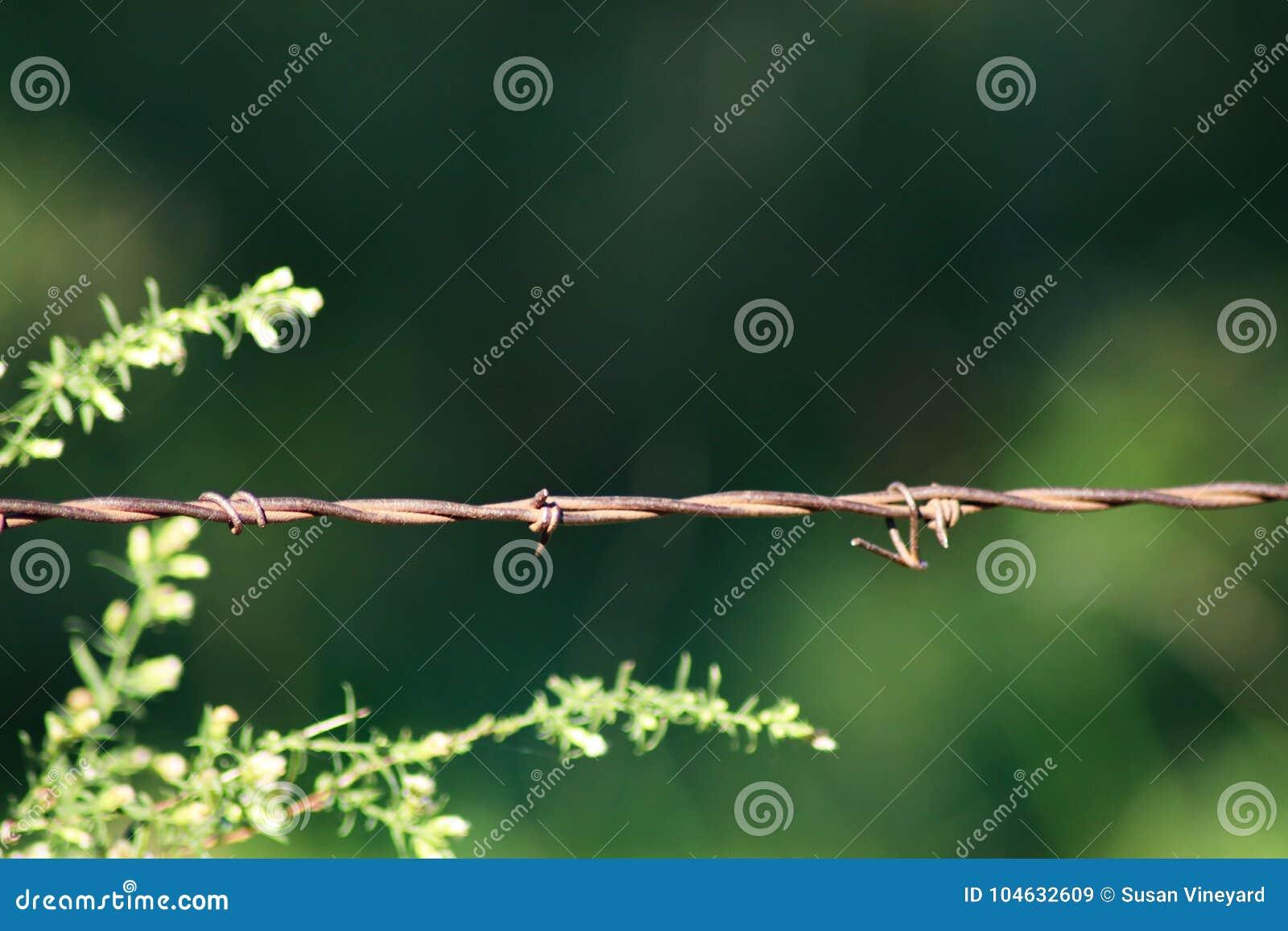 Download Prikkeldraadomheining Op Groene Achtergrond Stock Afbeelding - Afbeelding bestaande uit land, gevangenis: 104632609