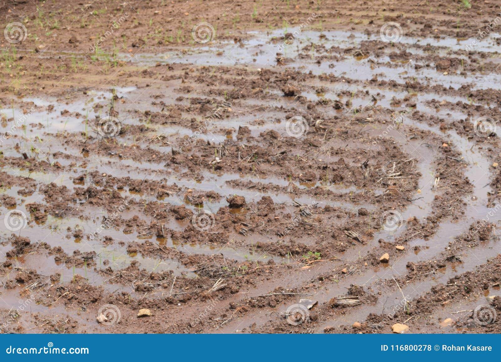 Prima fase di agricoltura, agricoltura