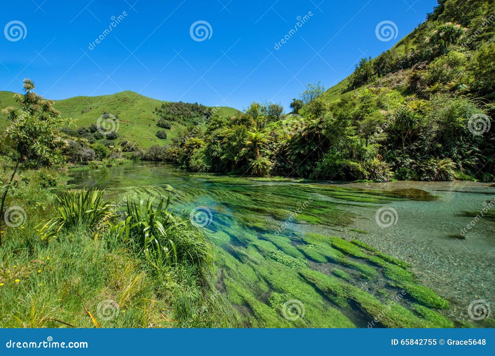 Primavera azul que está situada en Te Waihou Walkway, Hamilton New Zealand