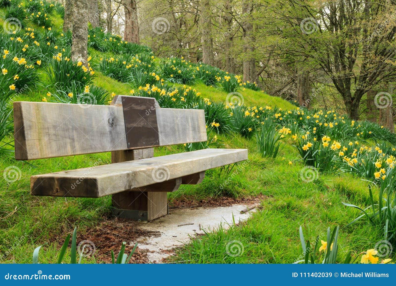 Primavera: Banco de parque em um mar dos narcisos amarelos