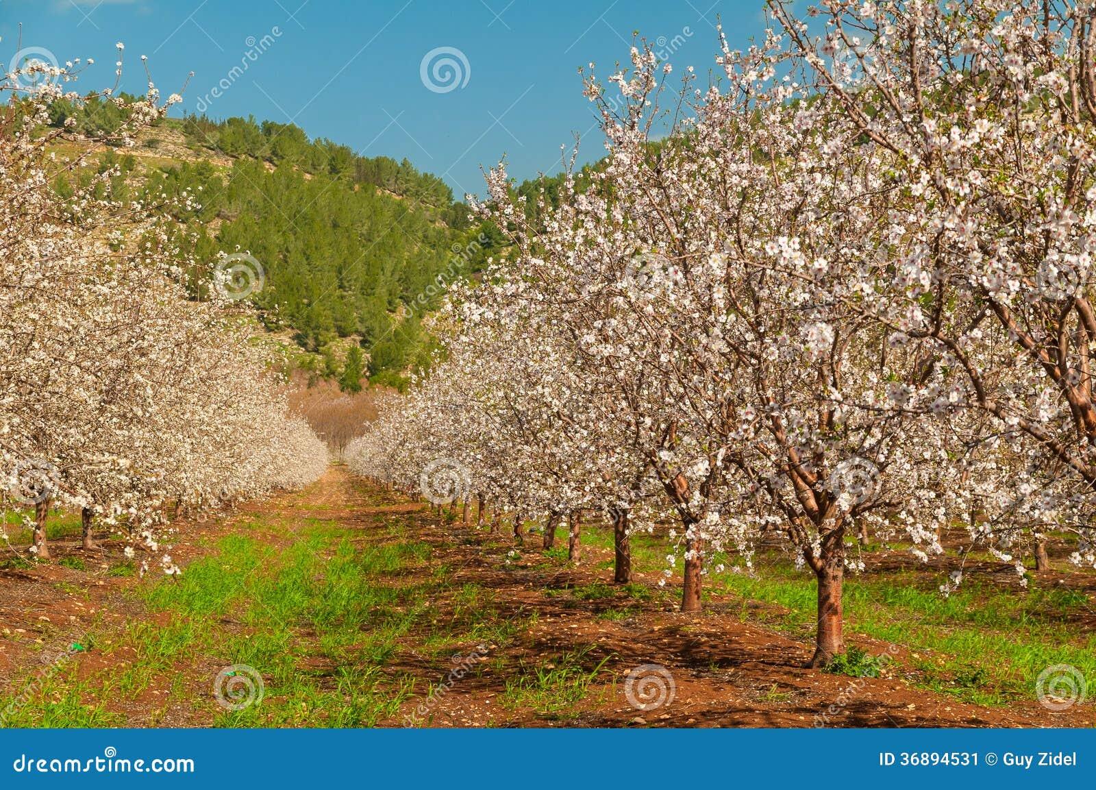 Download Primavera Che Fiorisce Nel Giardino Immagine Stock - Immagine di nave, filiale: 36894531