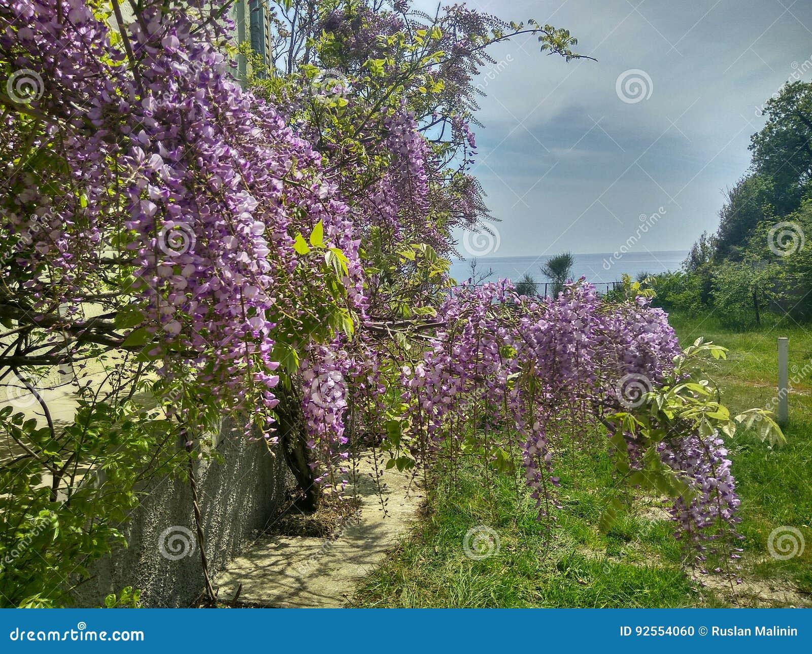 Primavera, città di Gelendzhik, montagne, mare, fiori, sole, bellezza