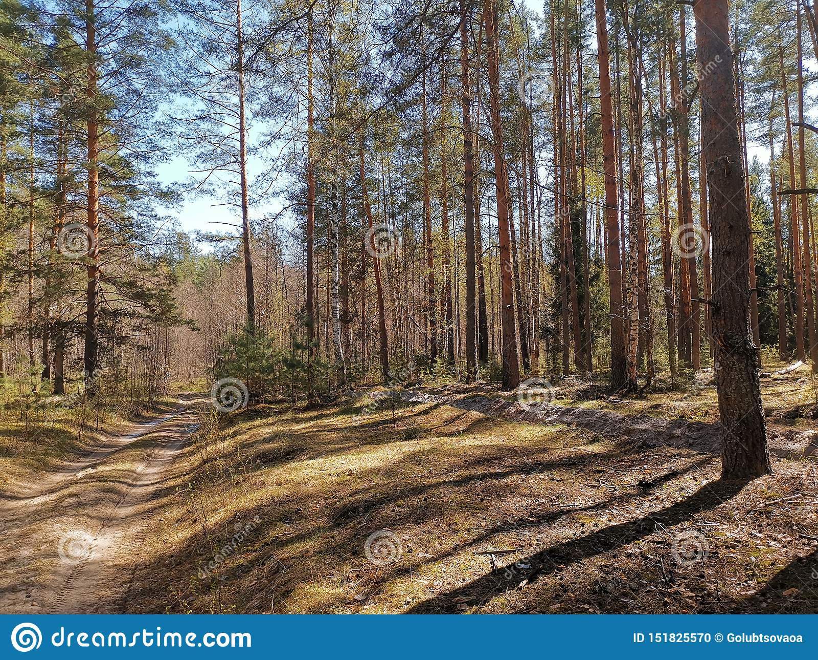Primavera de 2019 de Rússia da floresta do verão