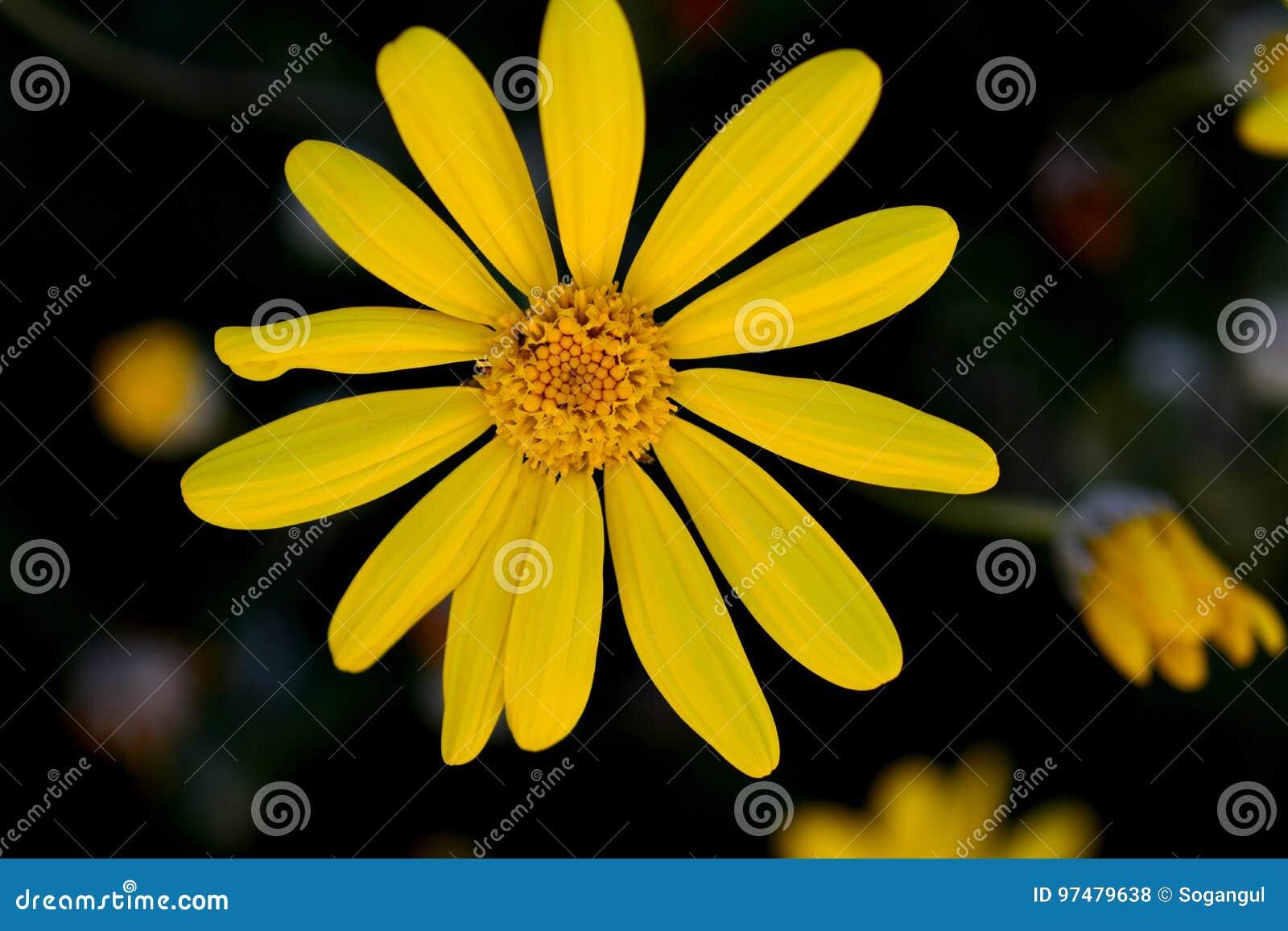Primavera e fiori