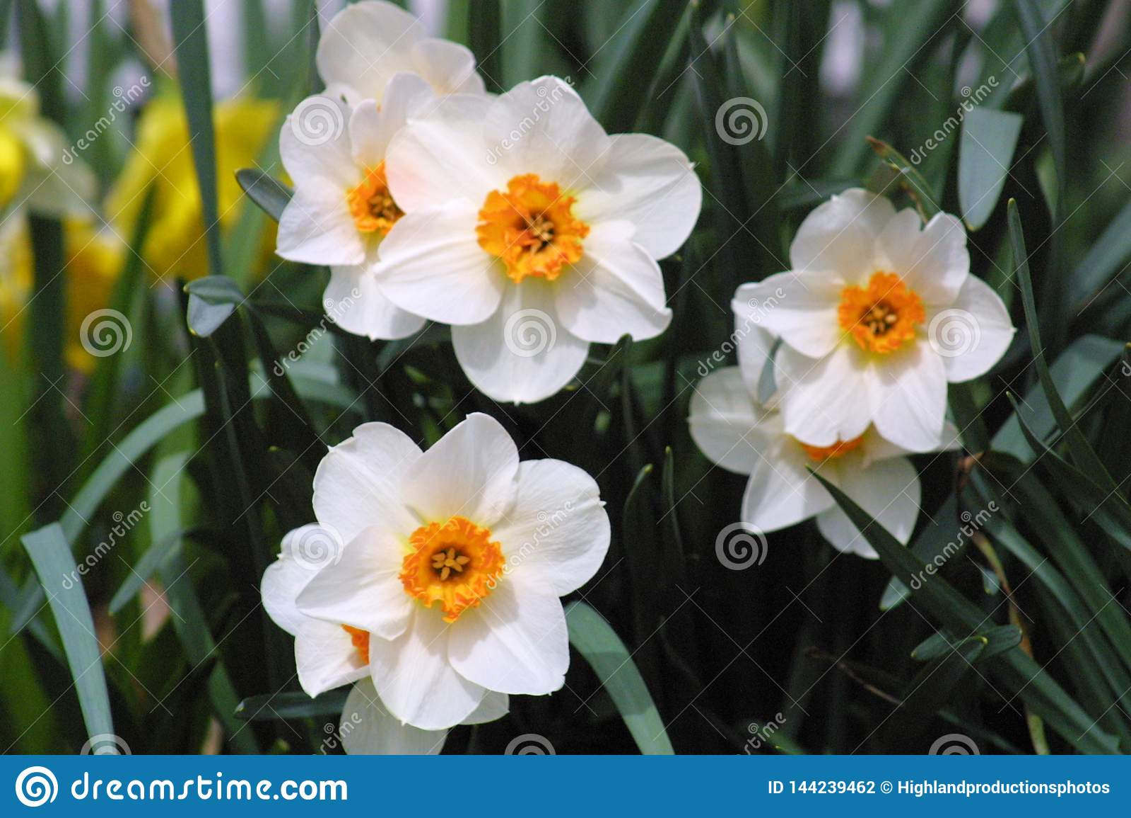 Primavera en la floración 2019 V