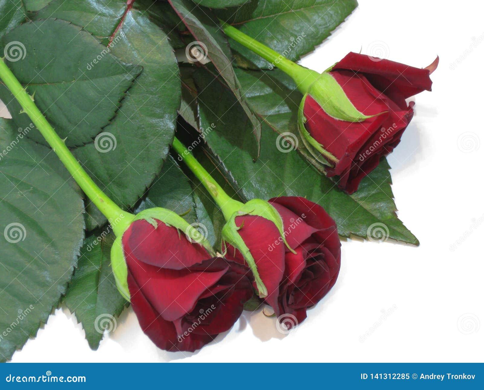 Primavera, l estate, i petali rosa vellutati eccitano l immaginazione ed attirano l occhio