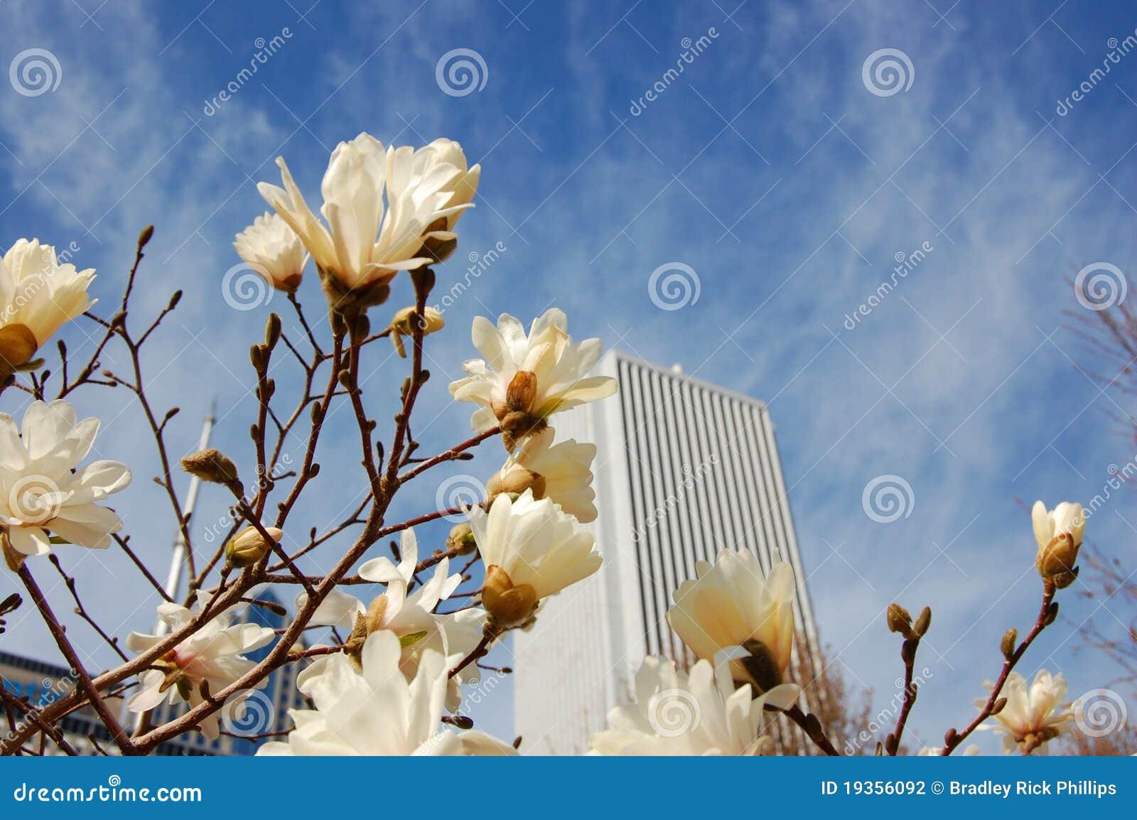 Primavera na cidade