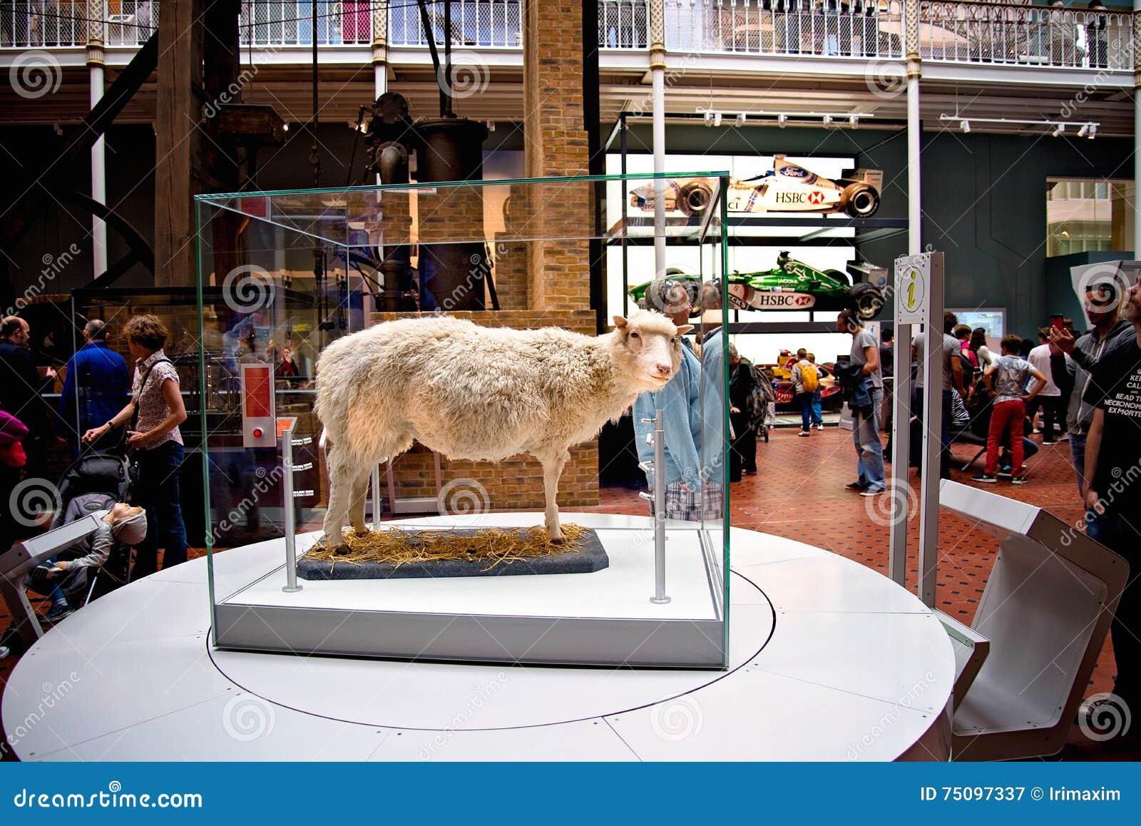 Primeira zorra clonada do mamífero os carneiros